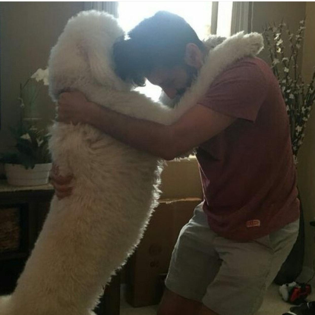 Ryan's dog boarding