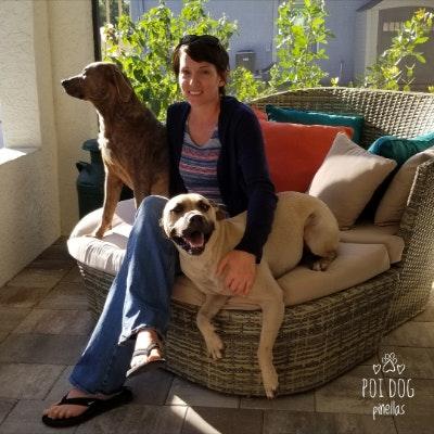 Brandy's dog day care