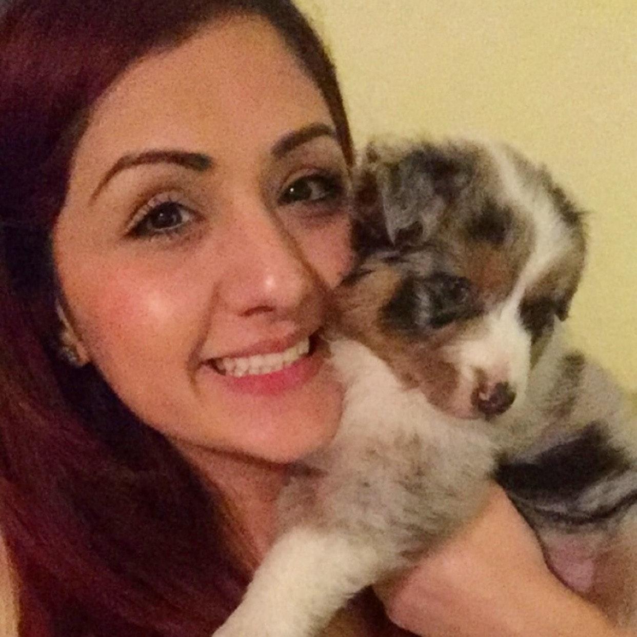 Sazan's dog day care