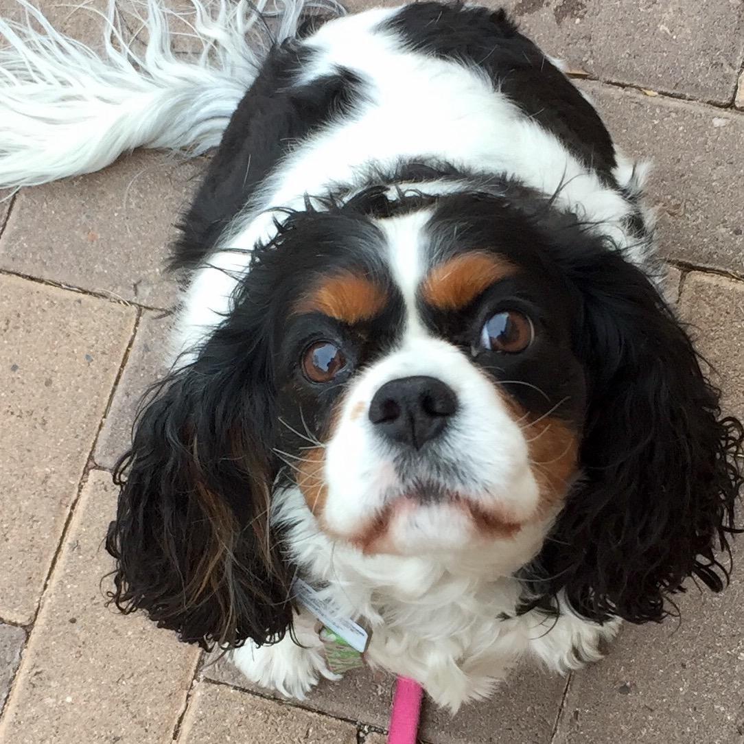 dog walker Patti Jo
