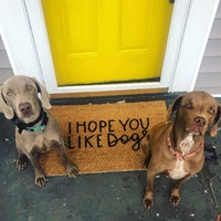 Chris & Lindsay's dog boarding