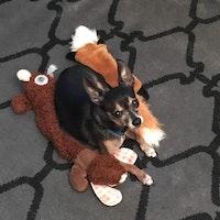 Elena's dog boarding