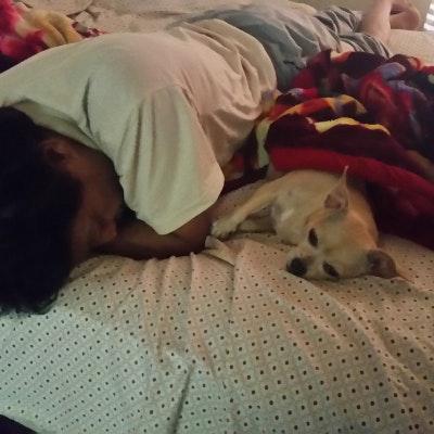 Karuna's dog day care