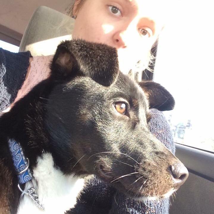 Faith's dog day care