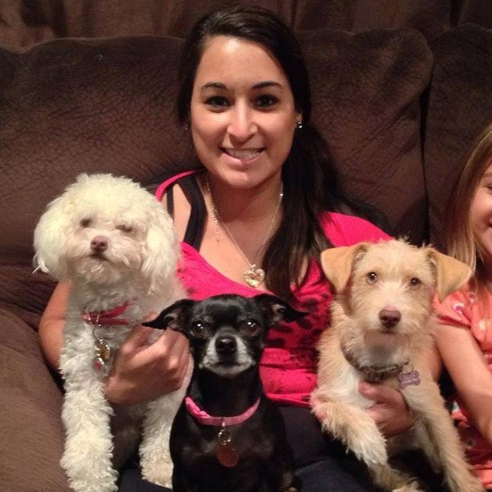 Shabana's dog day care