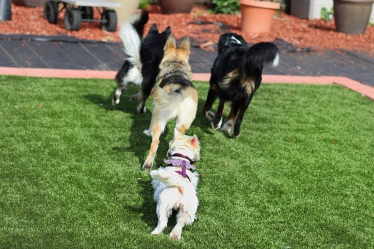 Hello! We are a family in a quiet neighborhood in Oakley,Ca. We have 2 dogs of our own who are great companions and social with all dogs. We have a German Sheperd Poodle Mix named Hershel, and a yorkie named Bruno who are super dog friendly and love to play. We also have 6 aquariums with Tropica...