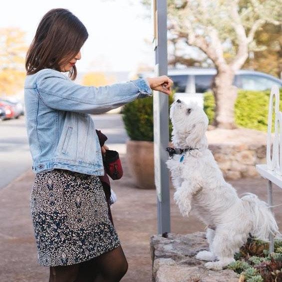 Tirtza's dog day care