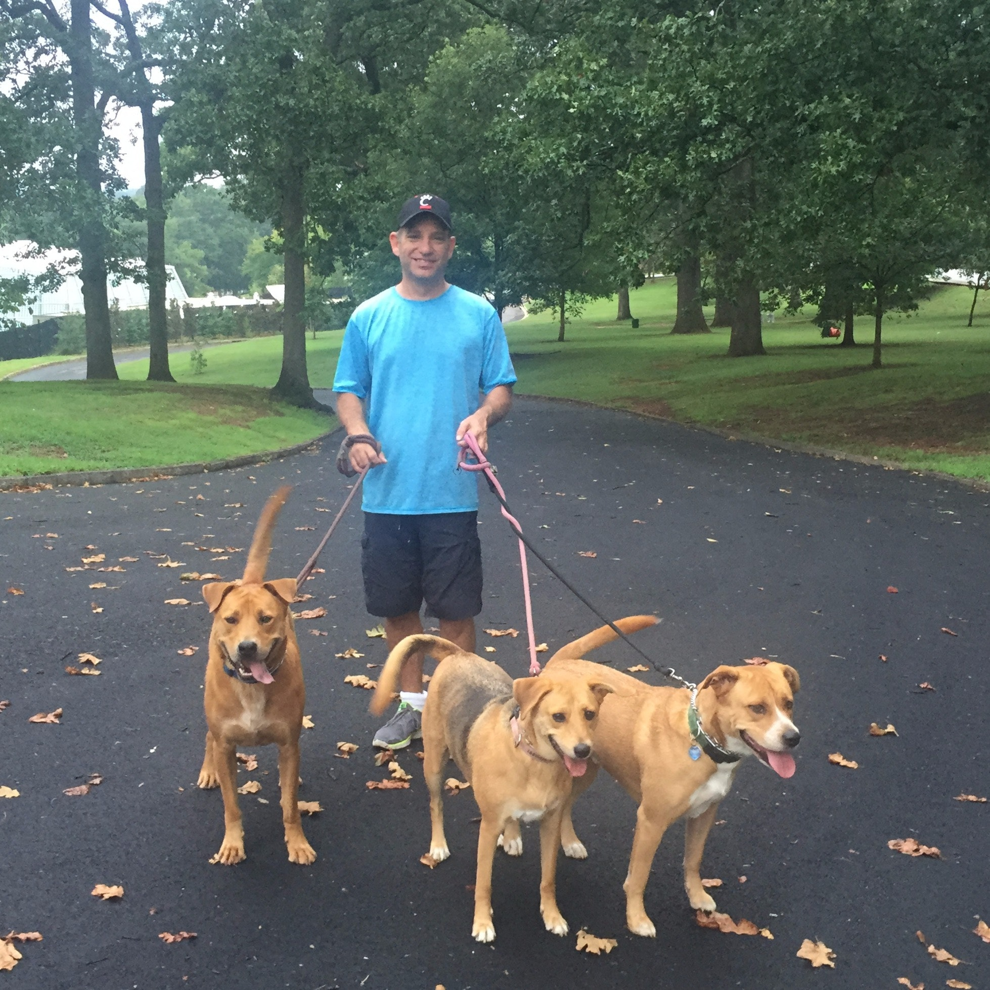 Jim's dog day care