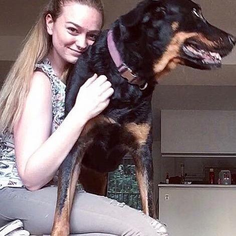 Amelia's dog day care