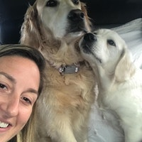 Nicki's dog day care