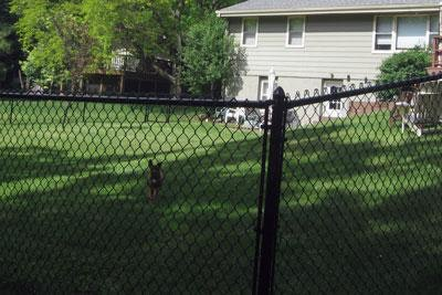 Brad's dog day care