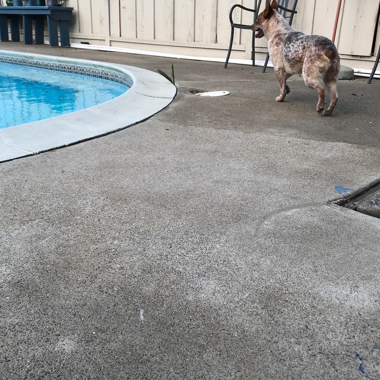 Eduardo's dog day care