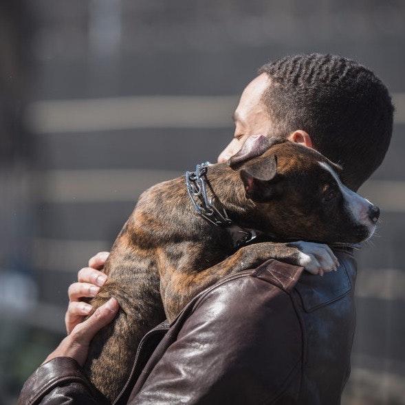 Bobby's dog day care