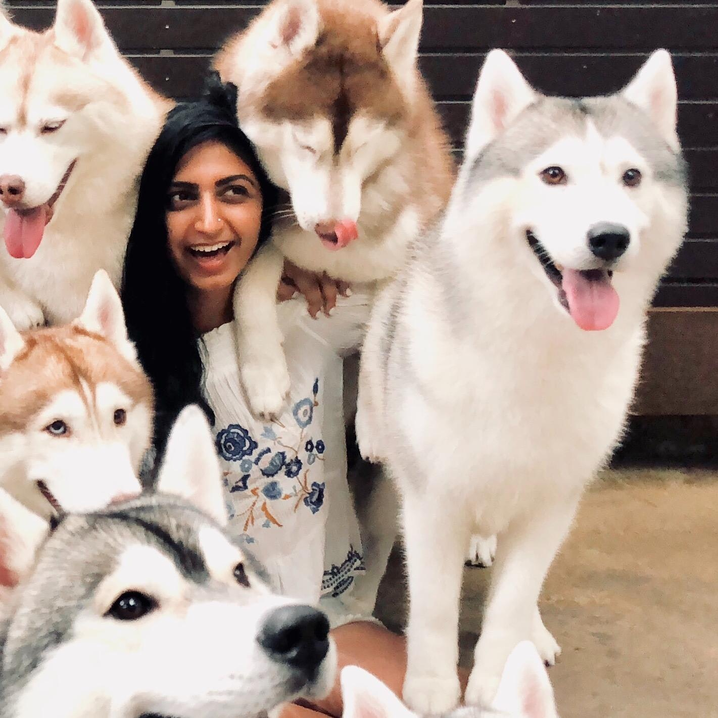 Komal's dog day care