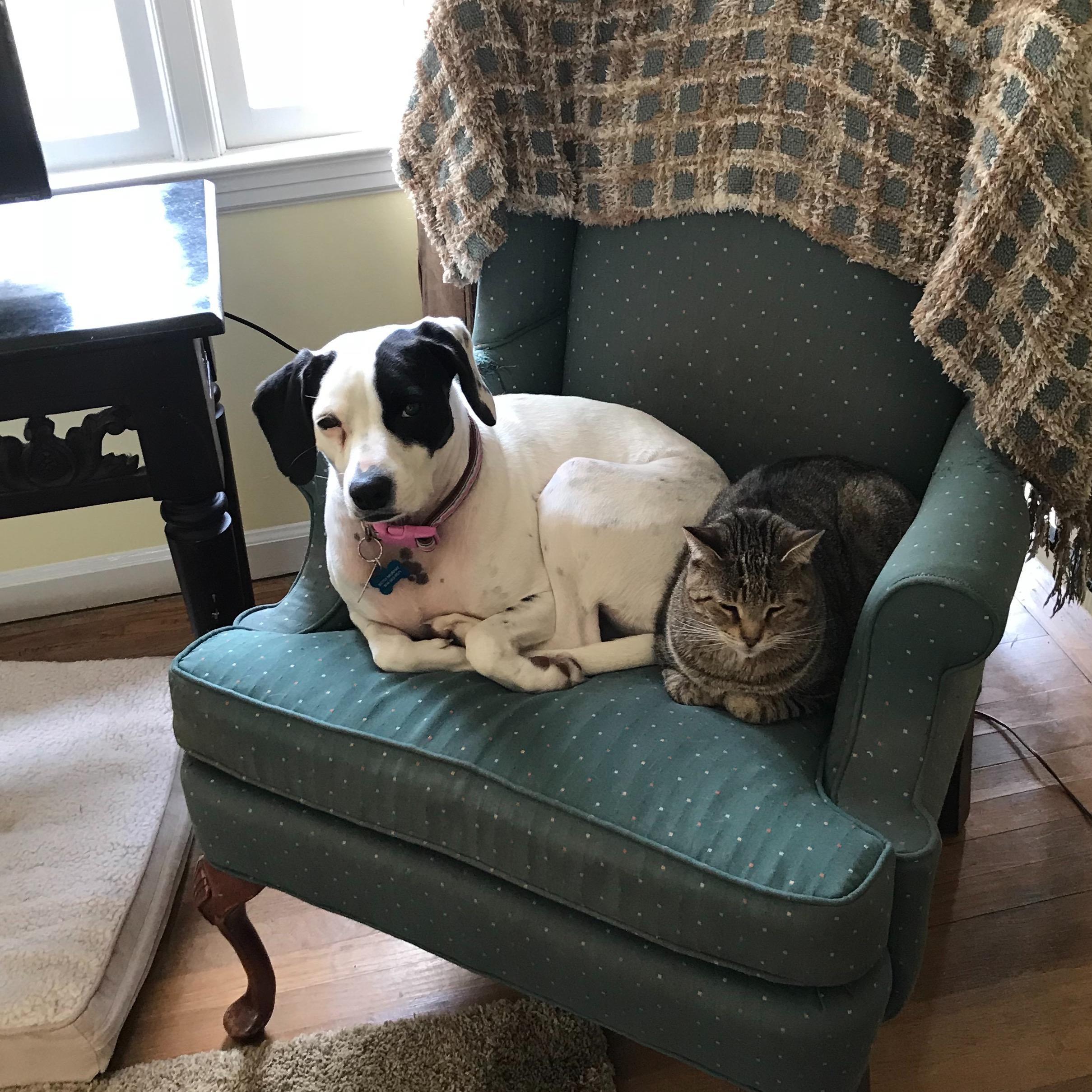 pet sitter Betsy
