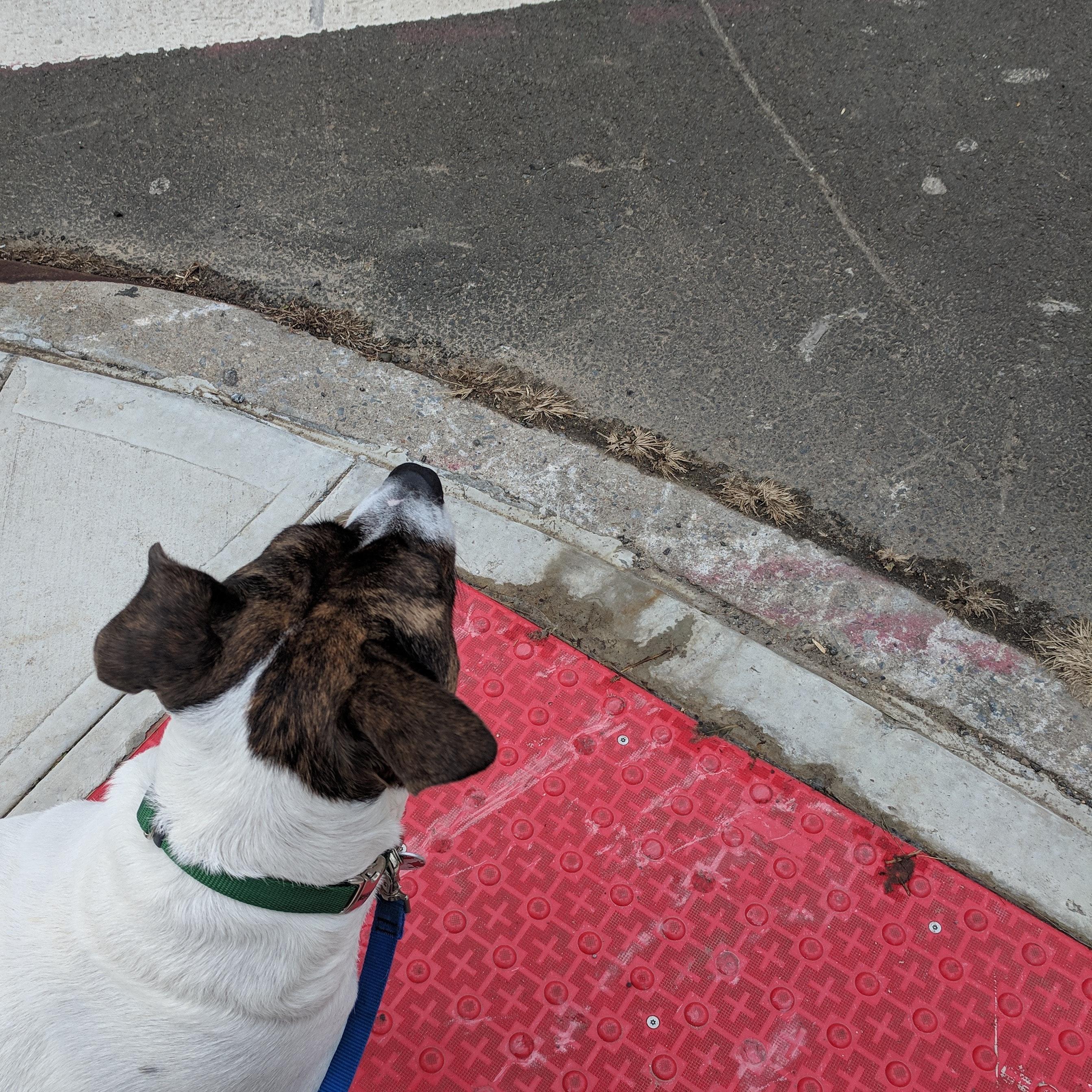 Hope's dog boarding