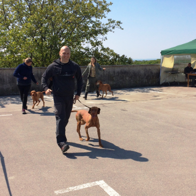 dog walker Zoran