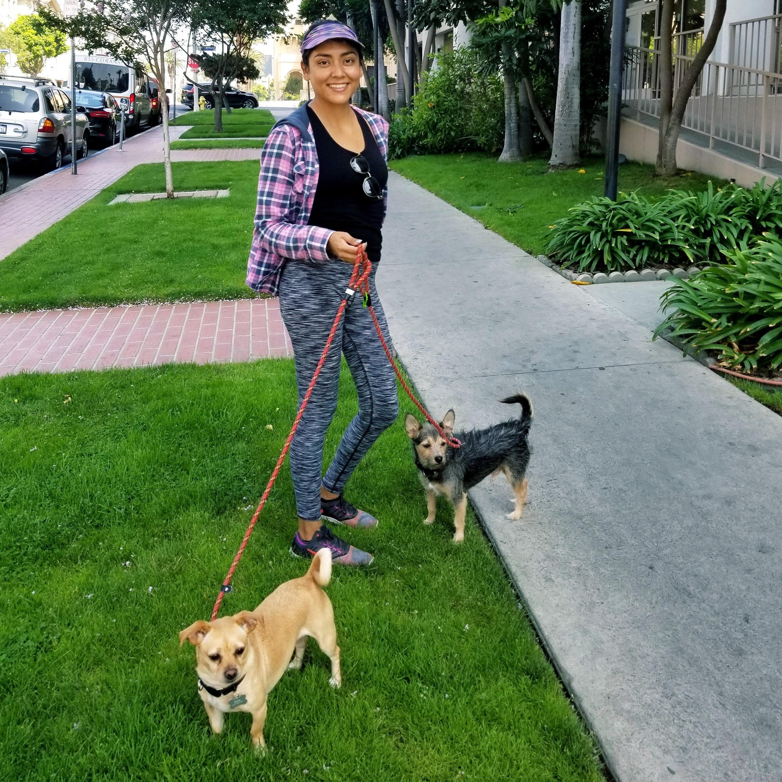 Rita's dog boarding