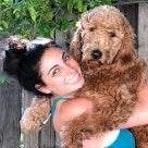 Sheila's dog boarding