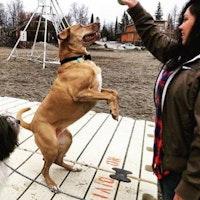 Erelyn's dog boarding
