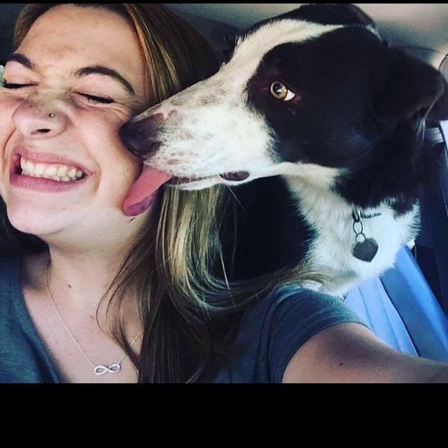 Rachel's dog boarding
