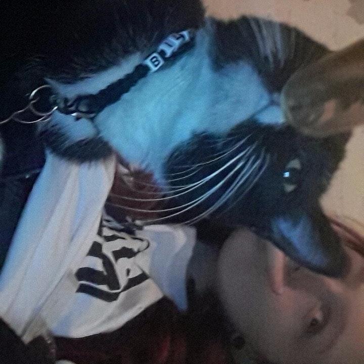 pet sitter Alyx