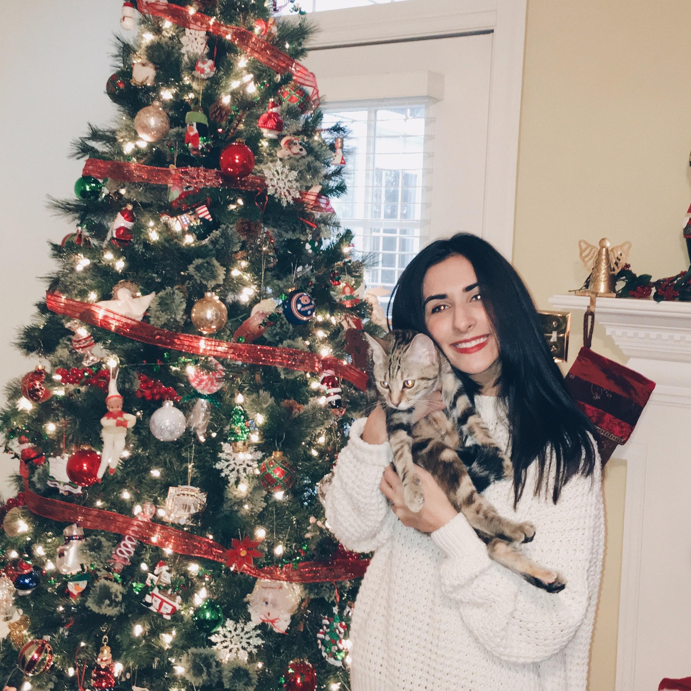 Andrina's dog day care