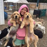Dog Day Care Nashua Nh