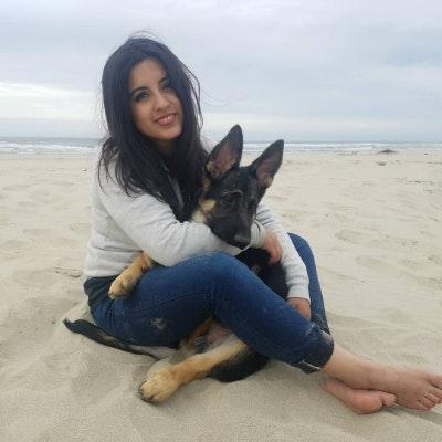 Susi's dog day care