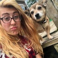 Raicheal's dog day care
