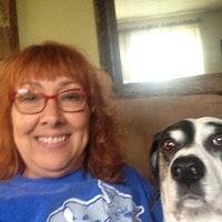 Florences Best Dog Boarding Sitters Dog Walkers Rovercom