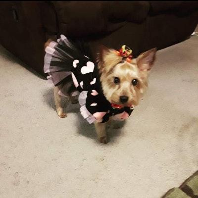 dog walker Tatyani