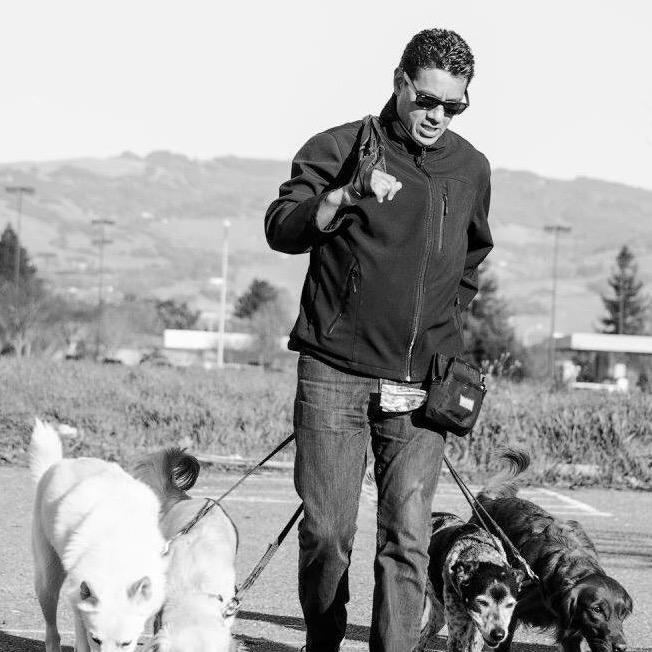 Isaac's dog day care