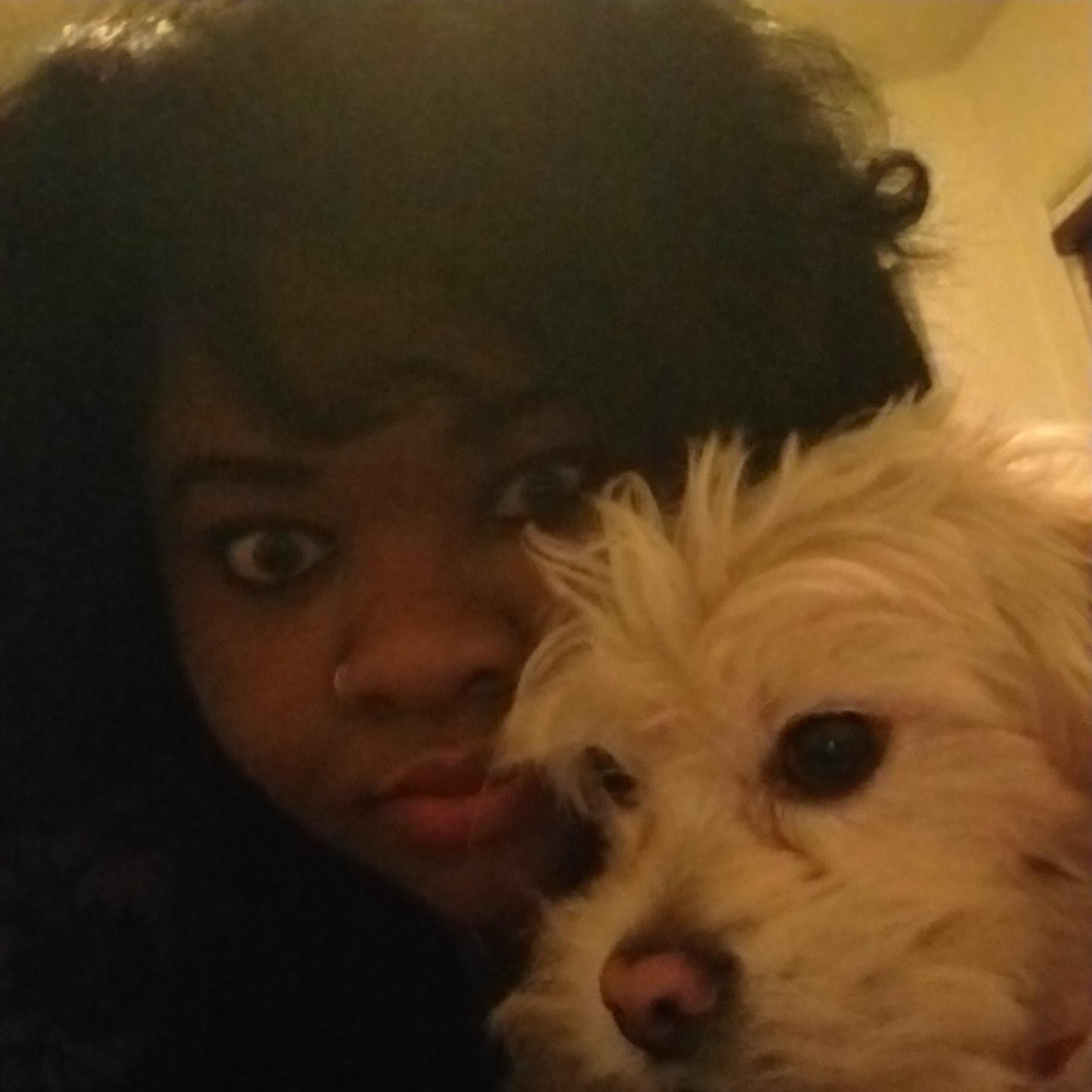 Braceda's dog day care