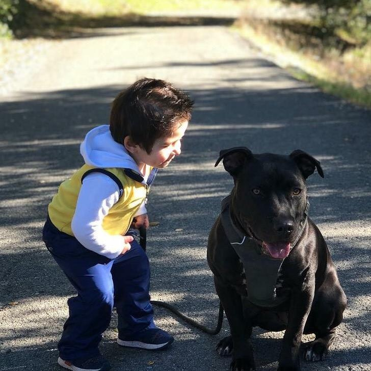Ashkan's dog boarding