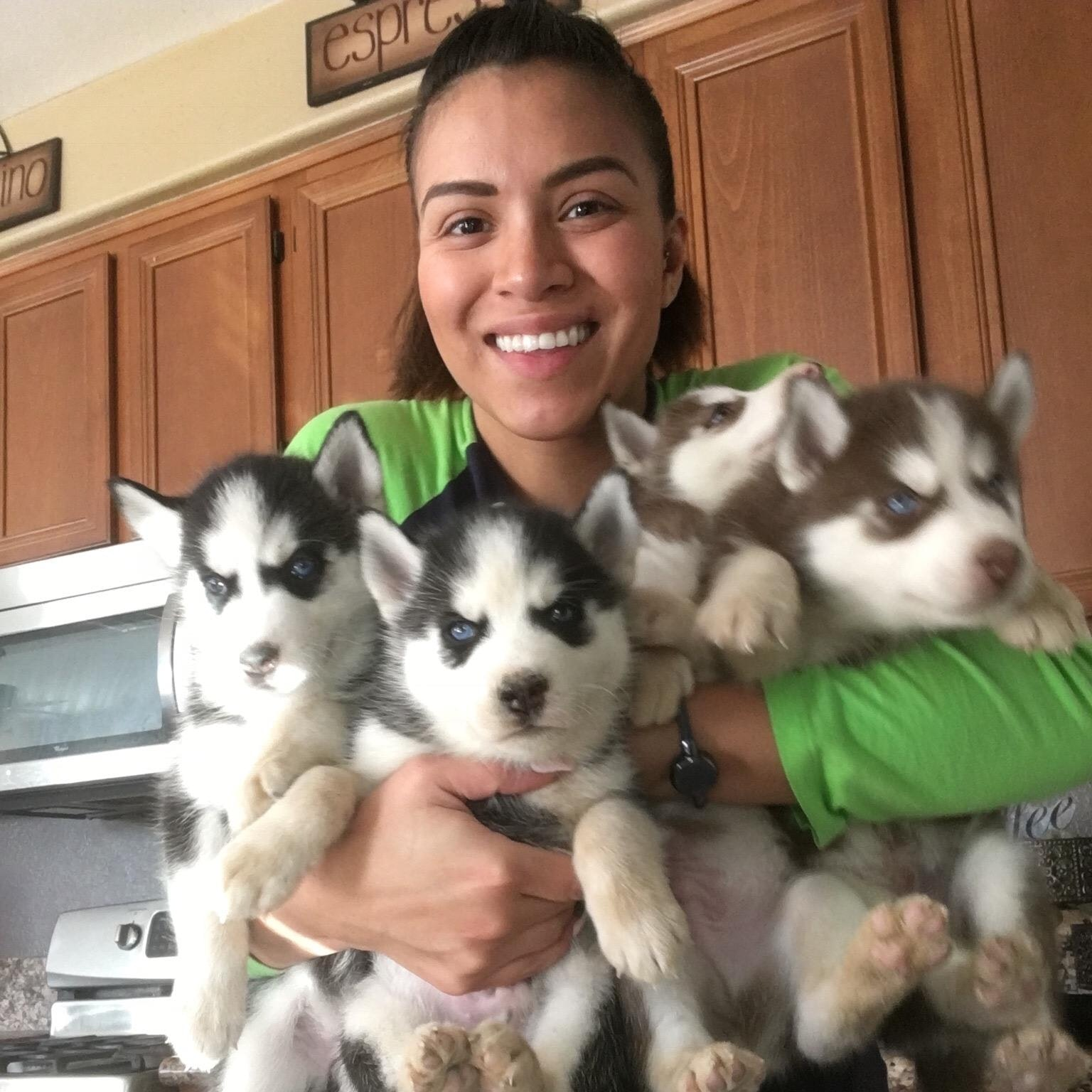 Mari's dog day care