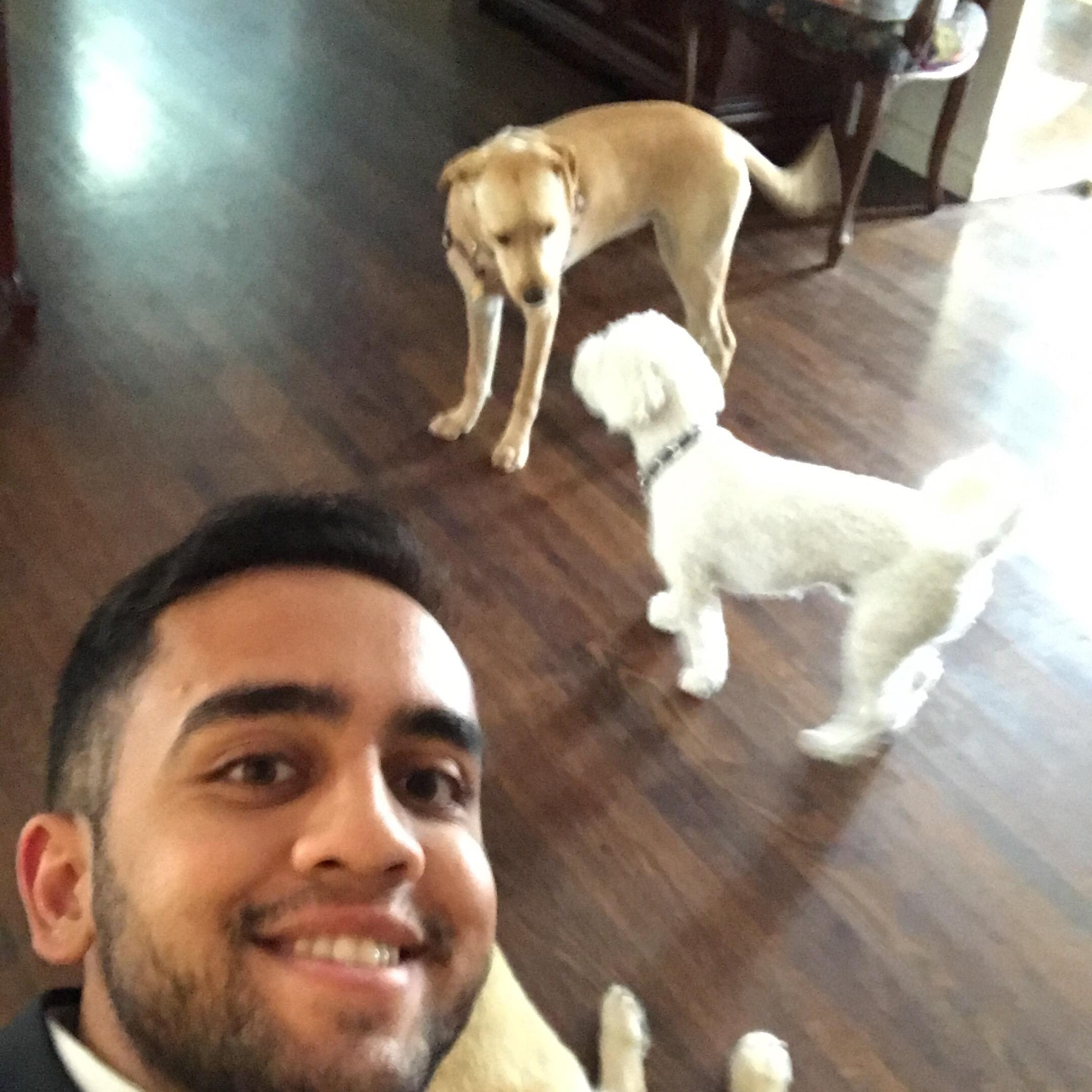 Ankit's dog day care