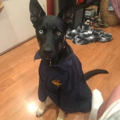 dog walker Troy