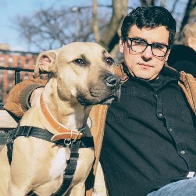 Davíd's dog day care