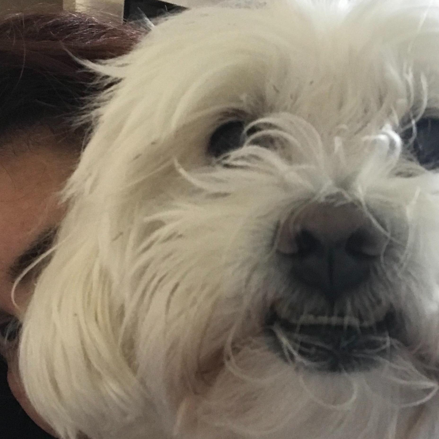 Nayiber's dog day care