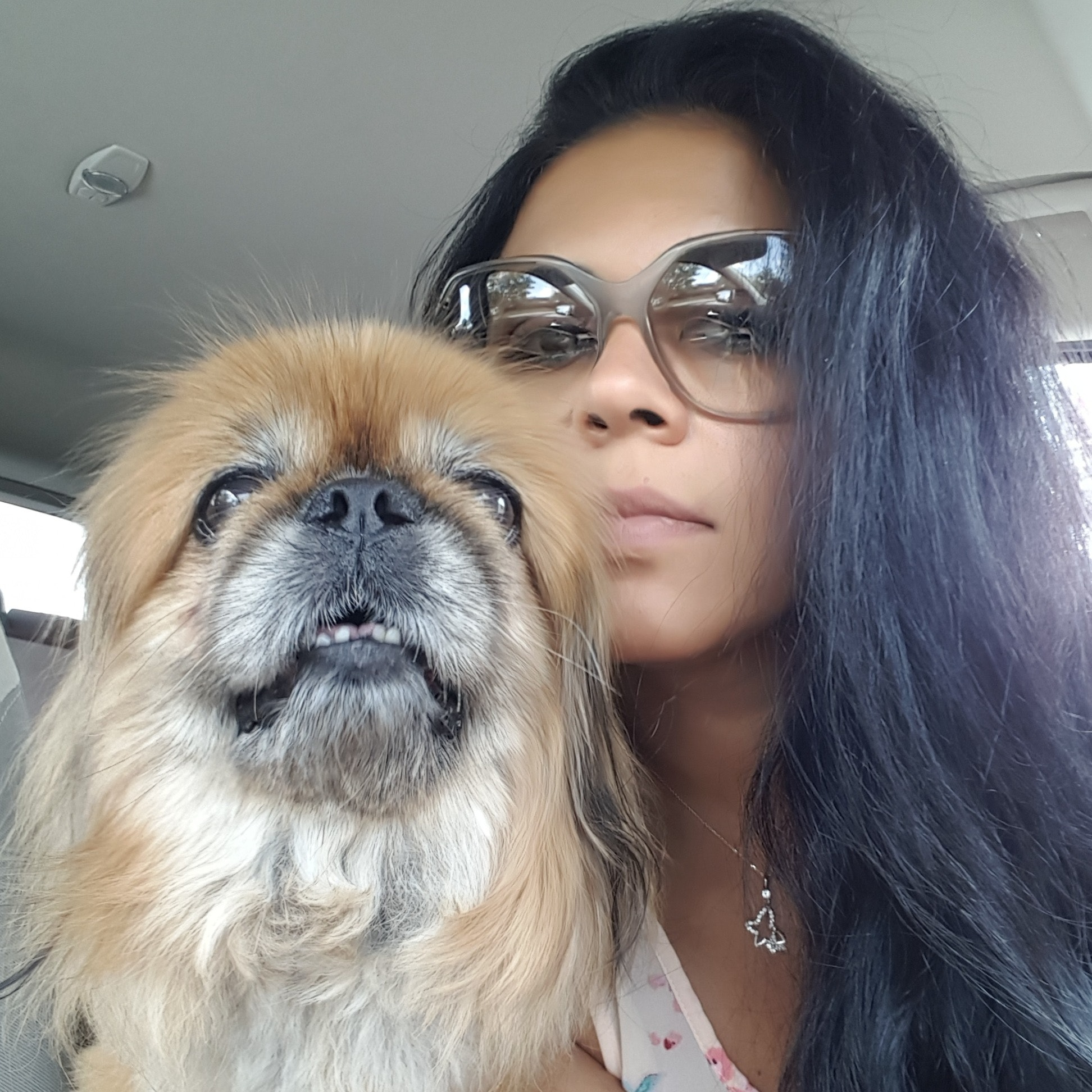 Nermine's dog boarding