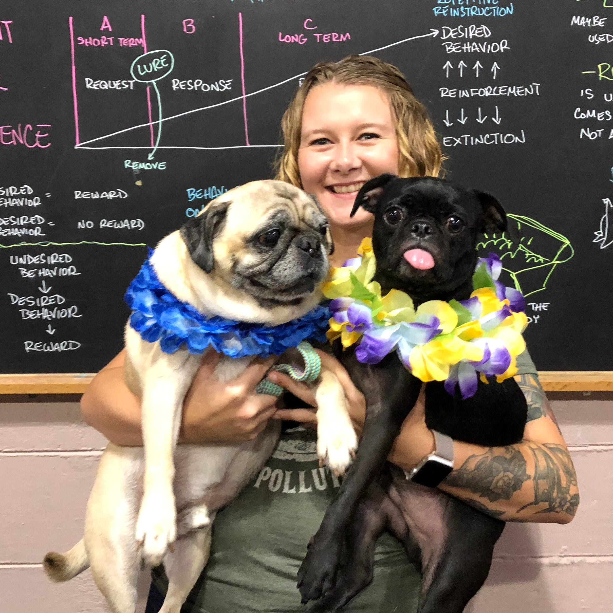 Liz's dog day care