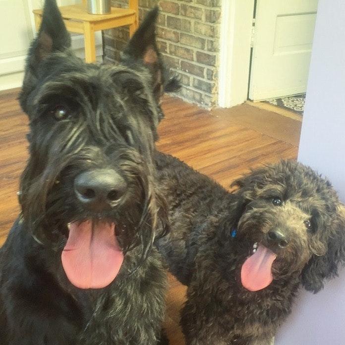 Esther & Pawel's dog boarding