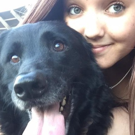 Breeana's dog day care