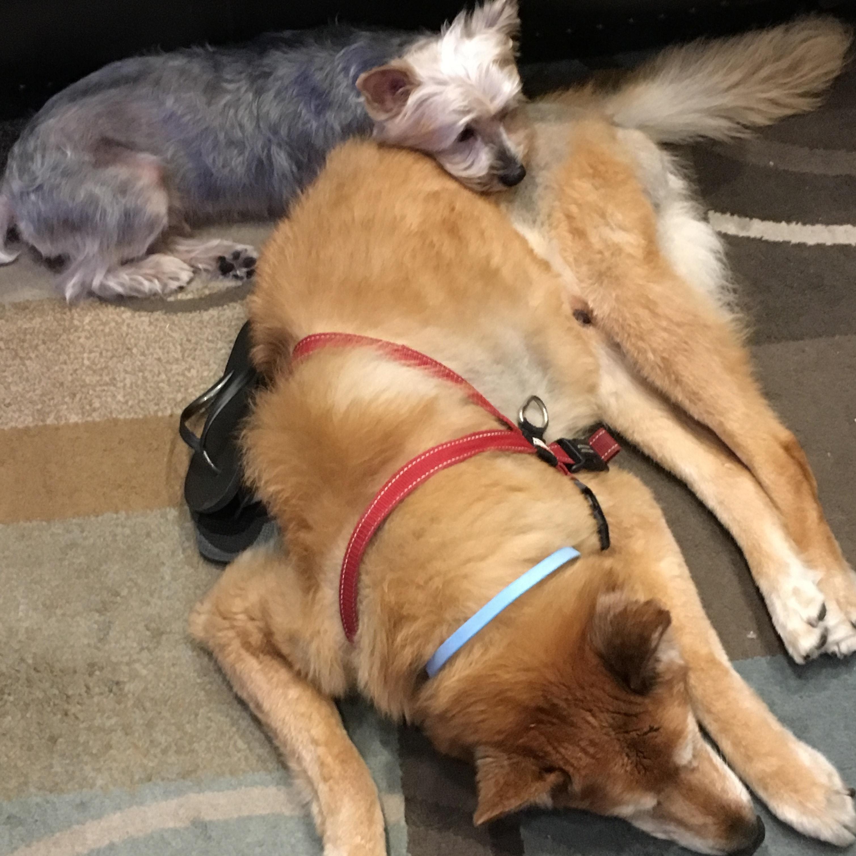 Albert's dog day care