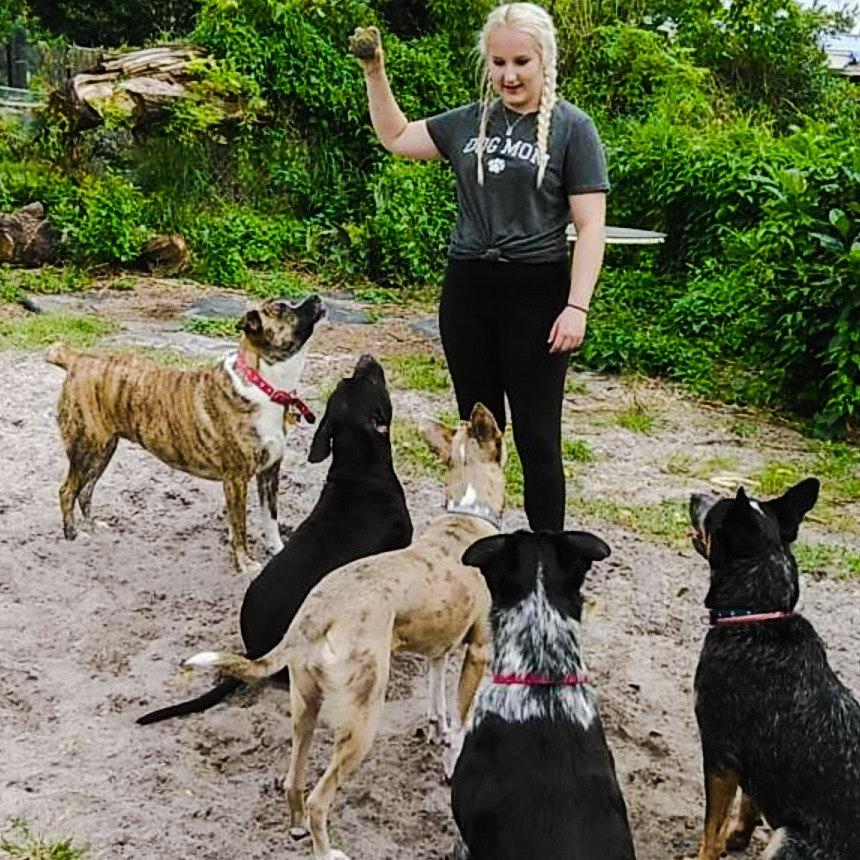 Hailey's dog day care