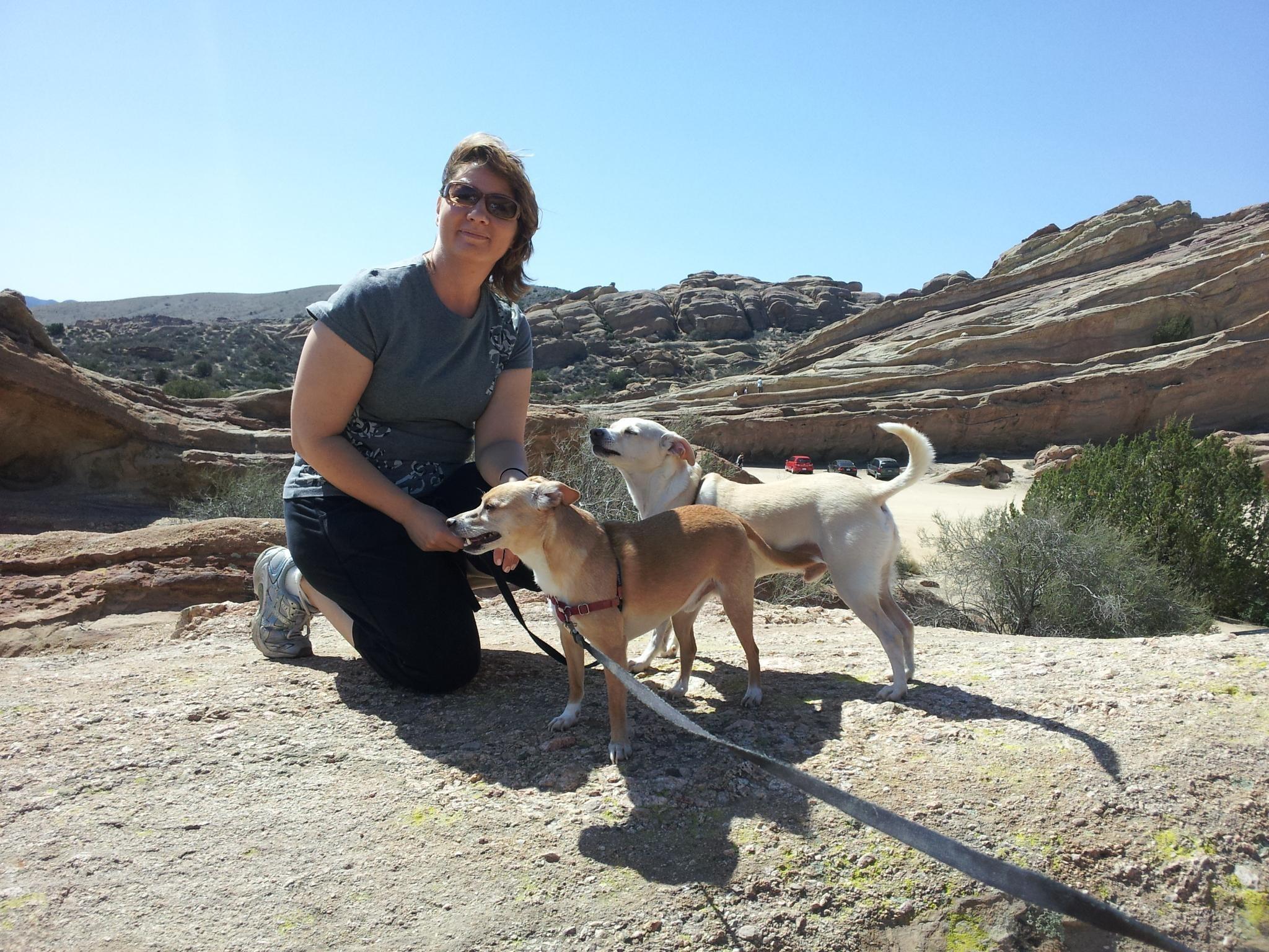 Caryn's dog day care