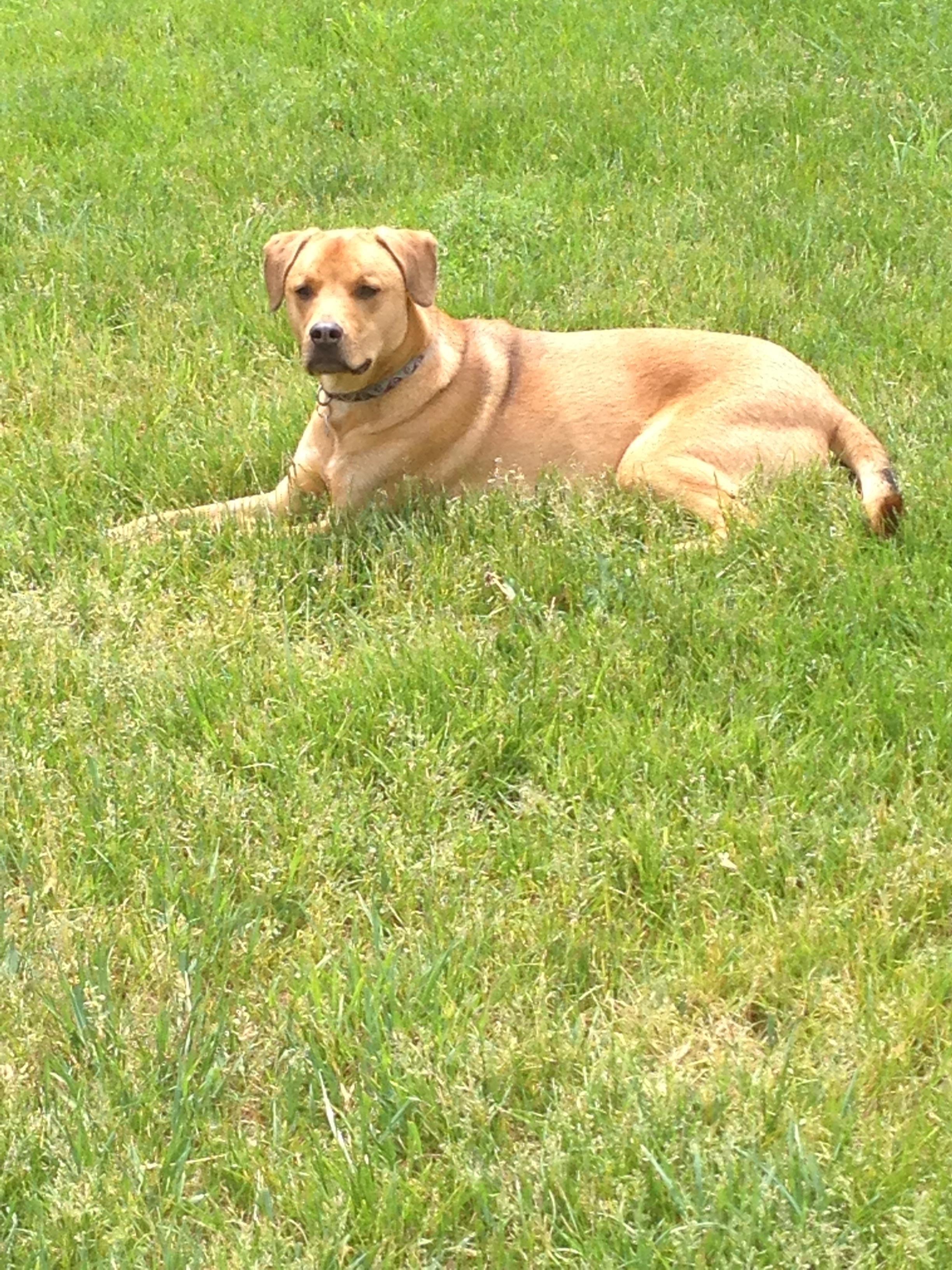dog walker Elysse