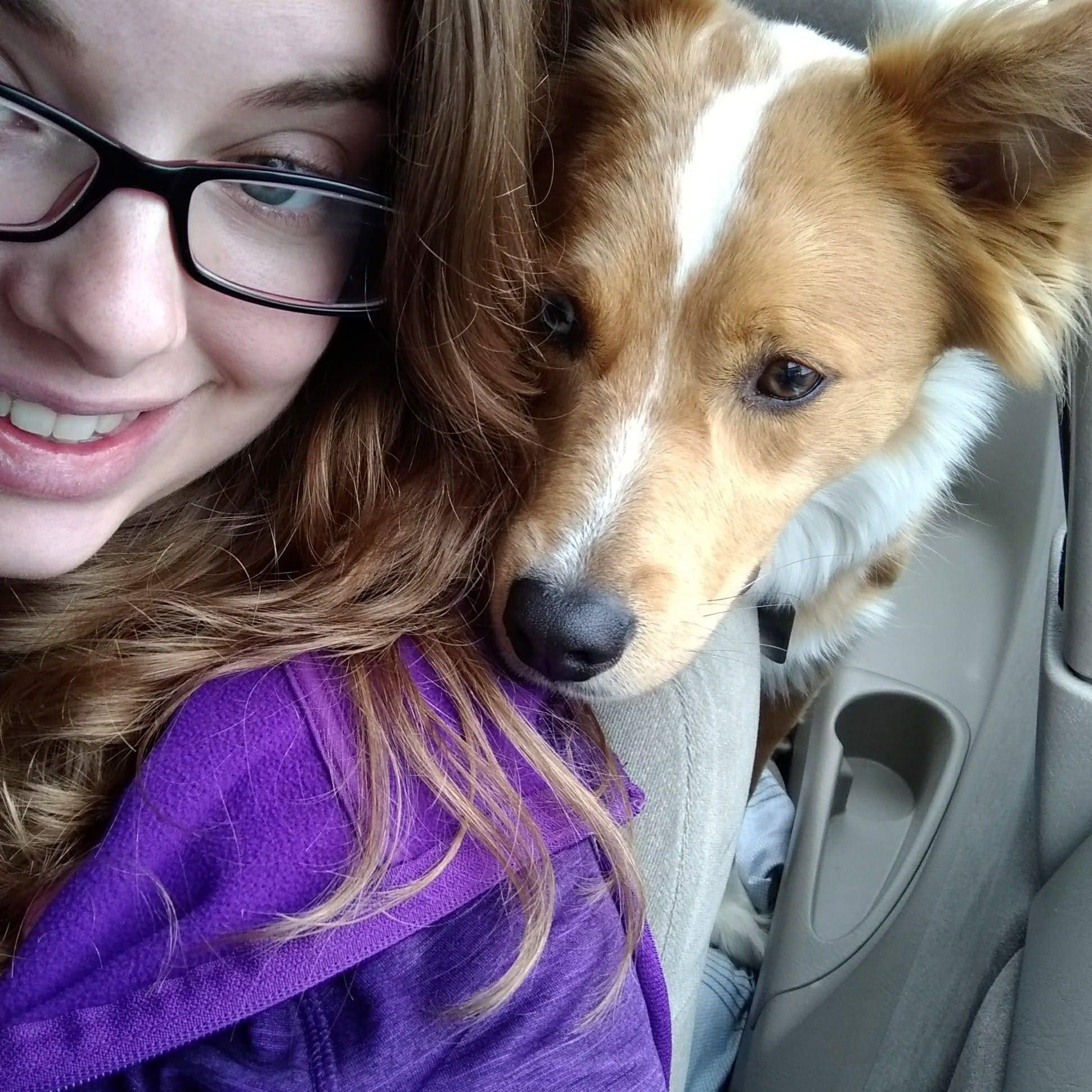 Alie's dog day care