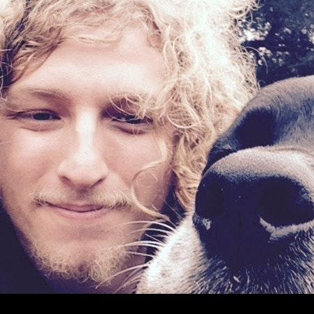 Owen's dog boarding